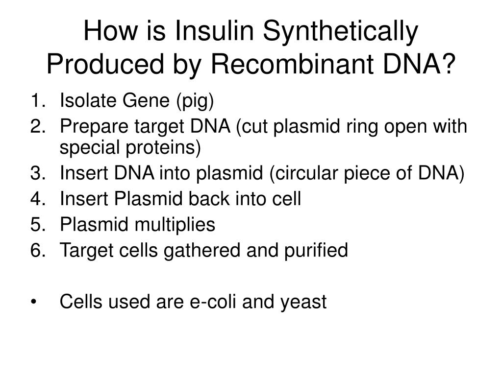 How is Insulin Synthetically Produced by Recombinant DNA?