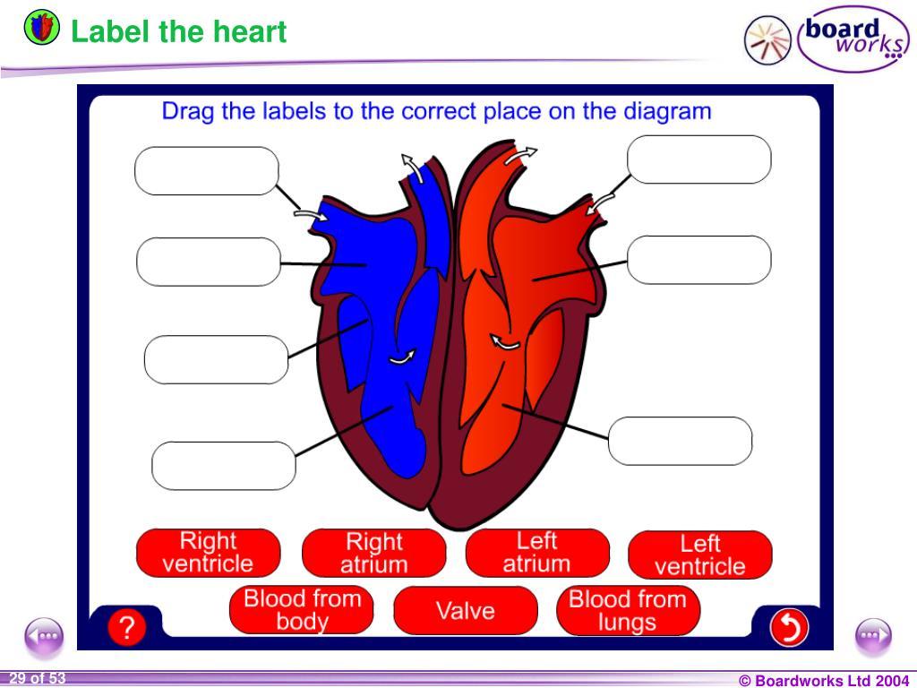 PPT - KS4 Biology PowerPoint Presentation, free download ...