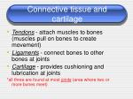 connective tissue and cartilage
