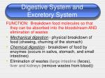 digestive system and excretory system