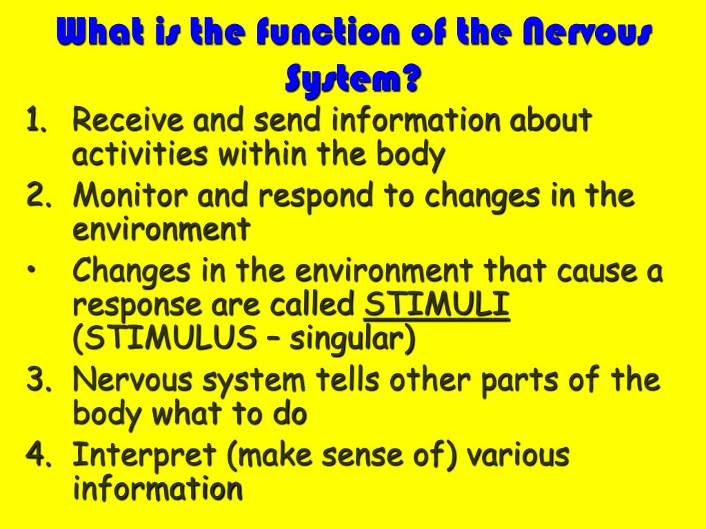 What is the function of the Nervous System?