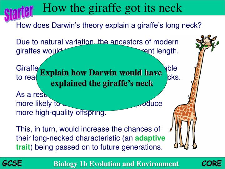 how the giraffe got its long Ages 5+ an evolutionary entertainment have you ever wondered how the giraffe got its long neck, how the leopard got its spots or how the elephant got its trunk.