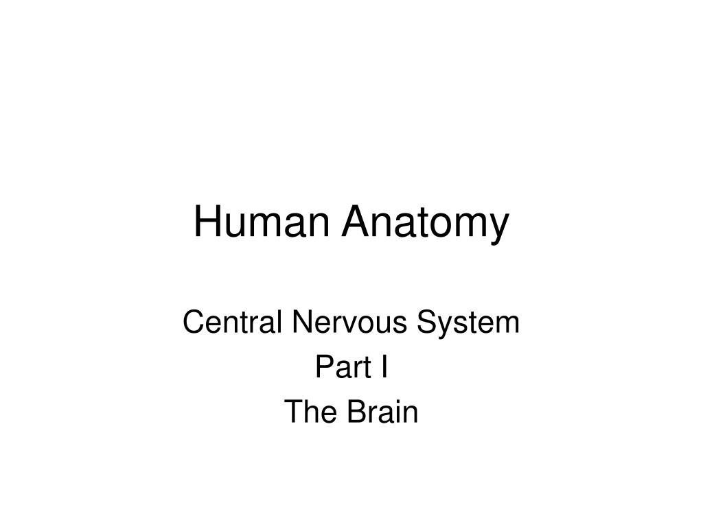 human anatomy l.