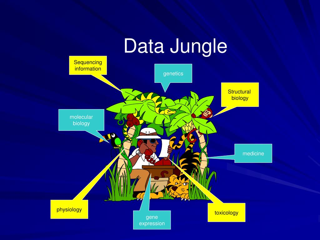 Data Jungle