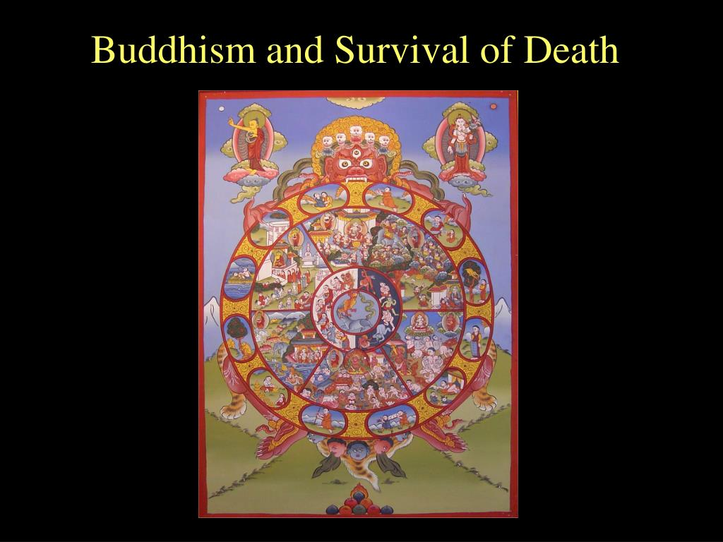buddhism and survival of death l.