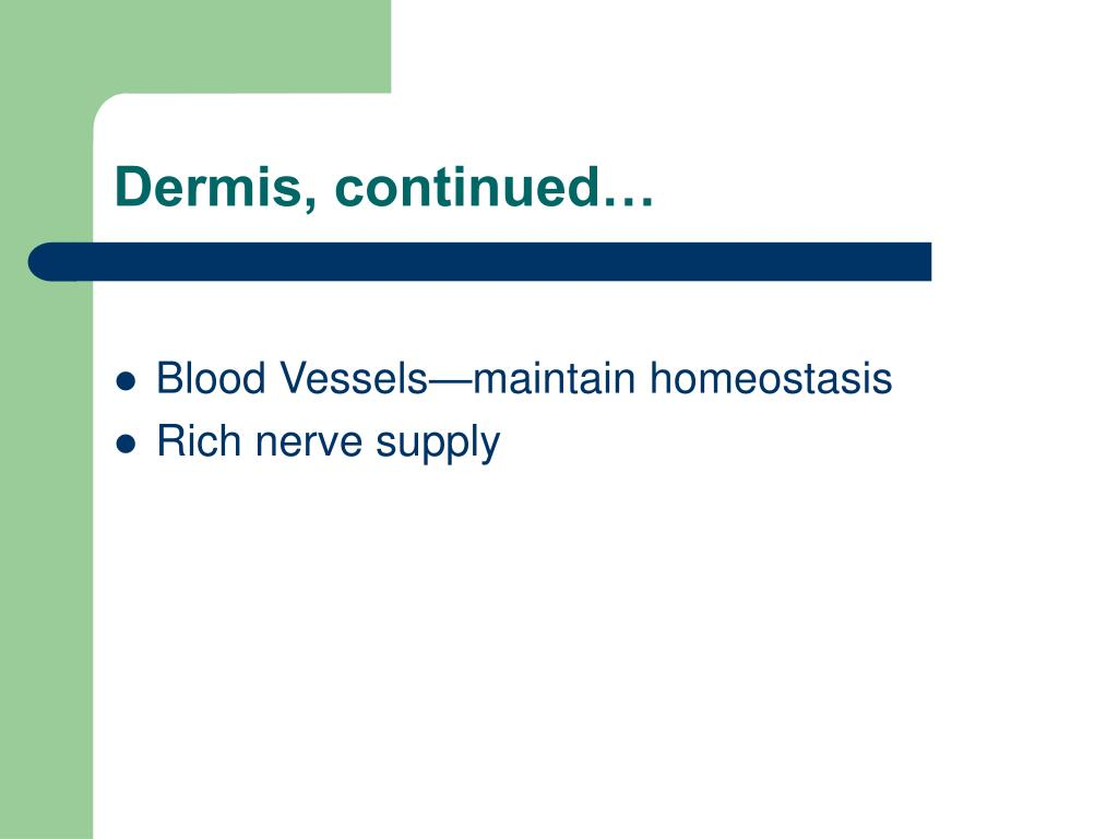 Dermis, continued…