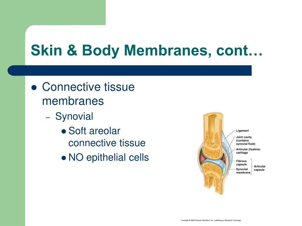 Skin & Body Membranes, cont…