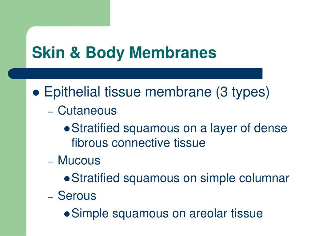 Skin & Body Membranes