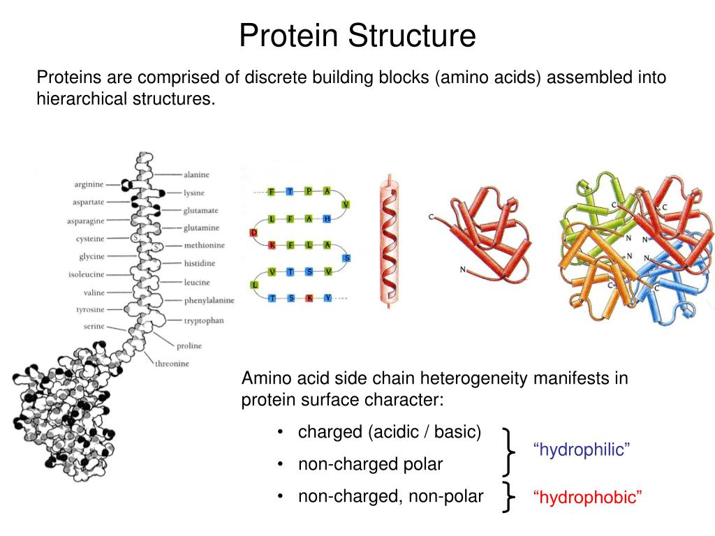 Amino acid side chain heterogeneity manifests in protein surface character: