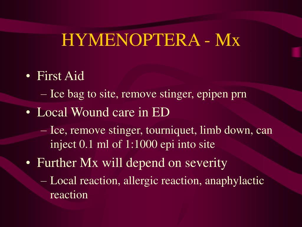 HYMENOPTERA - Mx