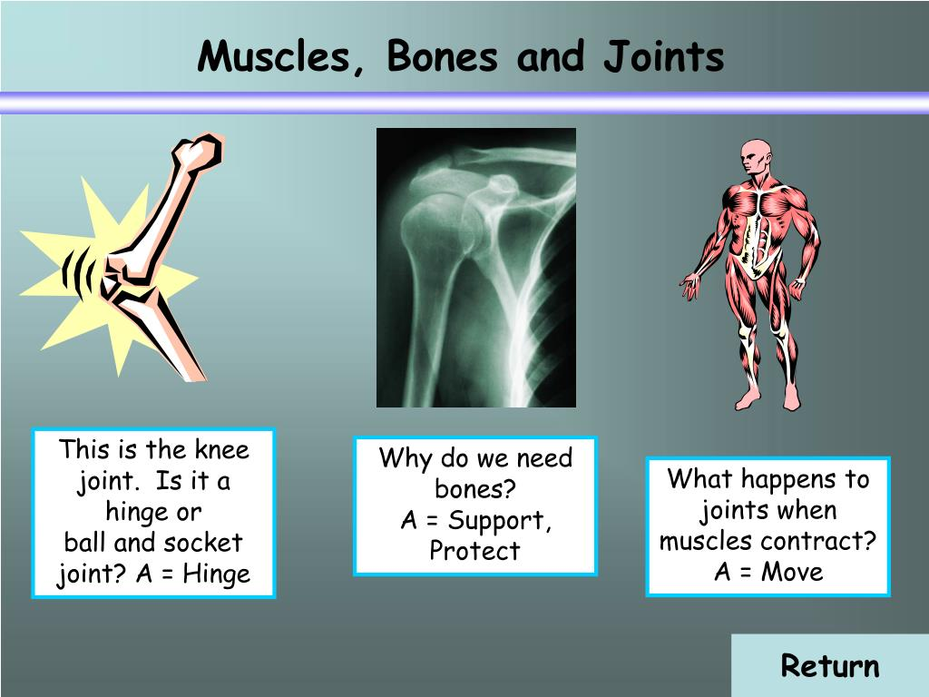 Muscles, Bones and Joints