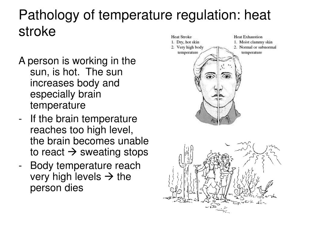 A person is working in the sun, is hot.  The sun increases body and especially brain temperature