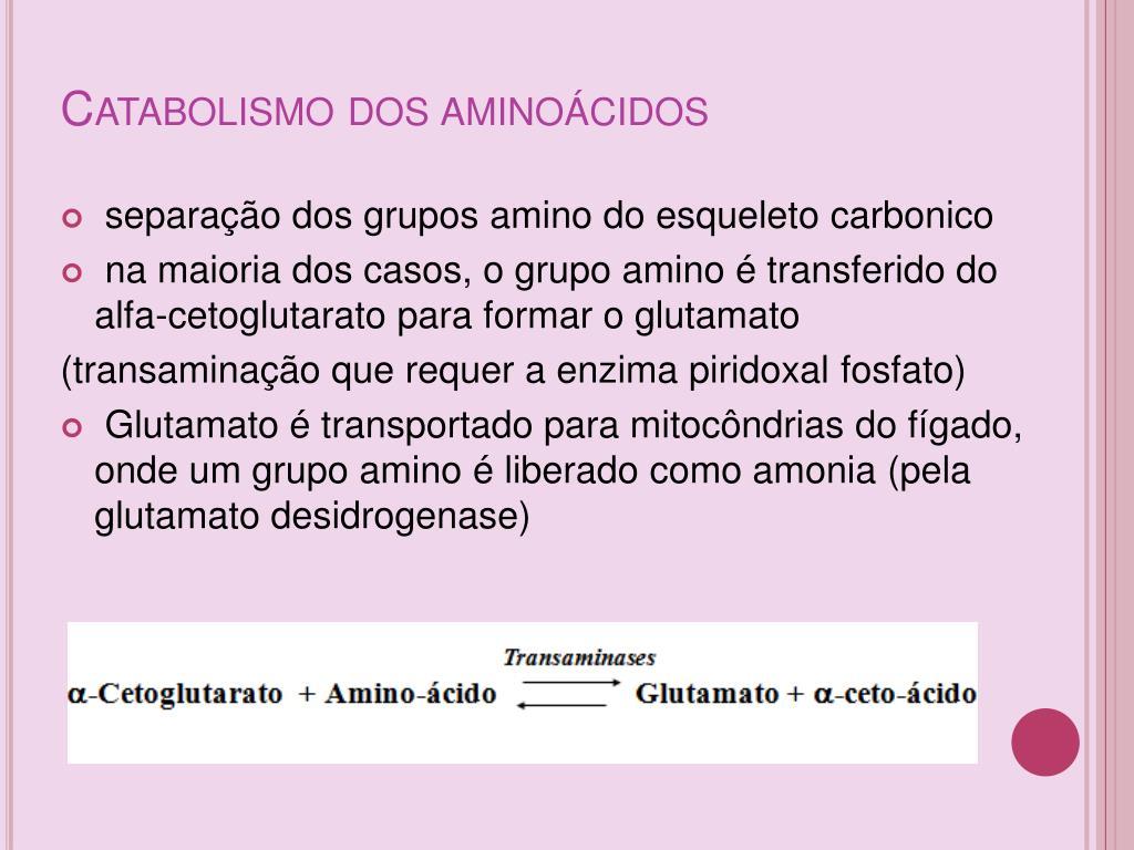 Catabolismo dos aminoácidos