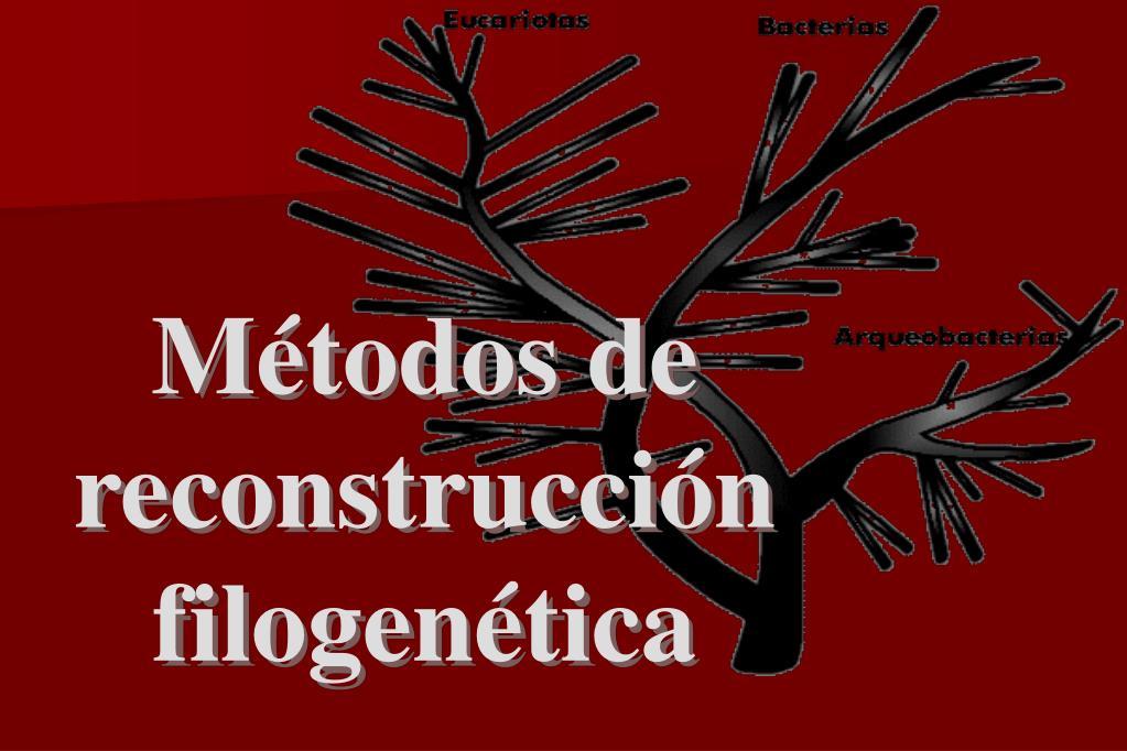 Métodos de reconstrucción filogenética