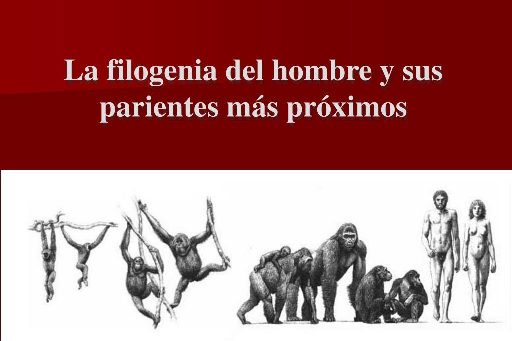 La filogenia del hombre y sus parientes más próximos