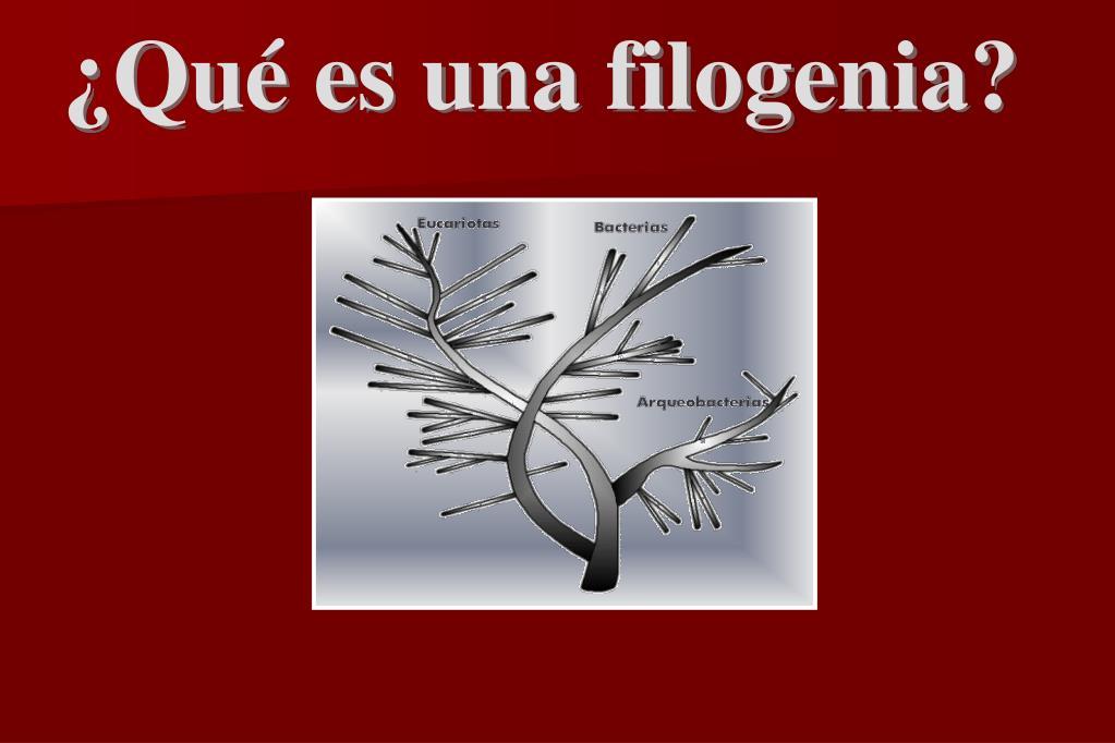 ¿Qué es una filogenia?