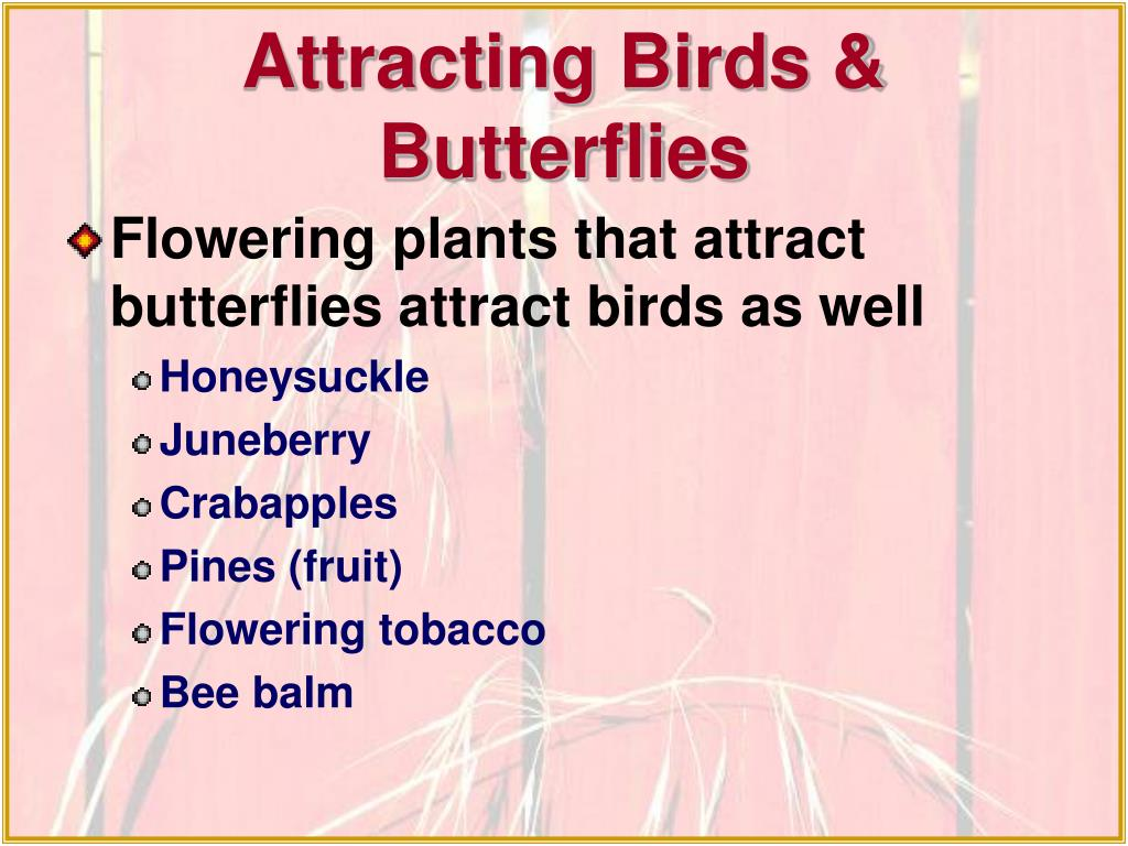 Attracting Birds & Butterflies
