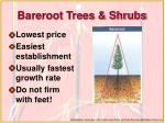 bareroot trees shrubs