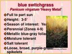 blue switchgrass panicum virgatum heavy metal