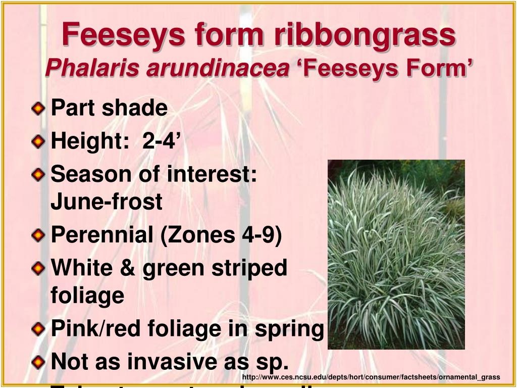 Feeseys form ribbongrass