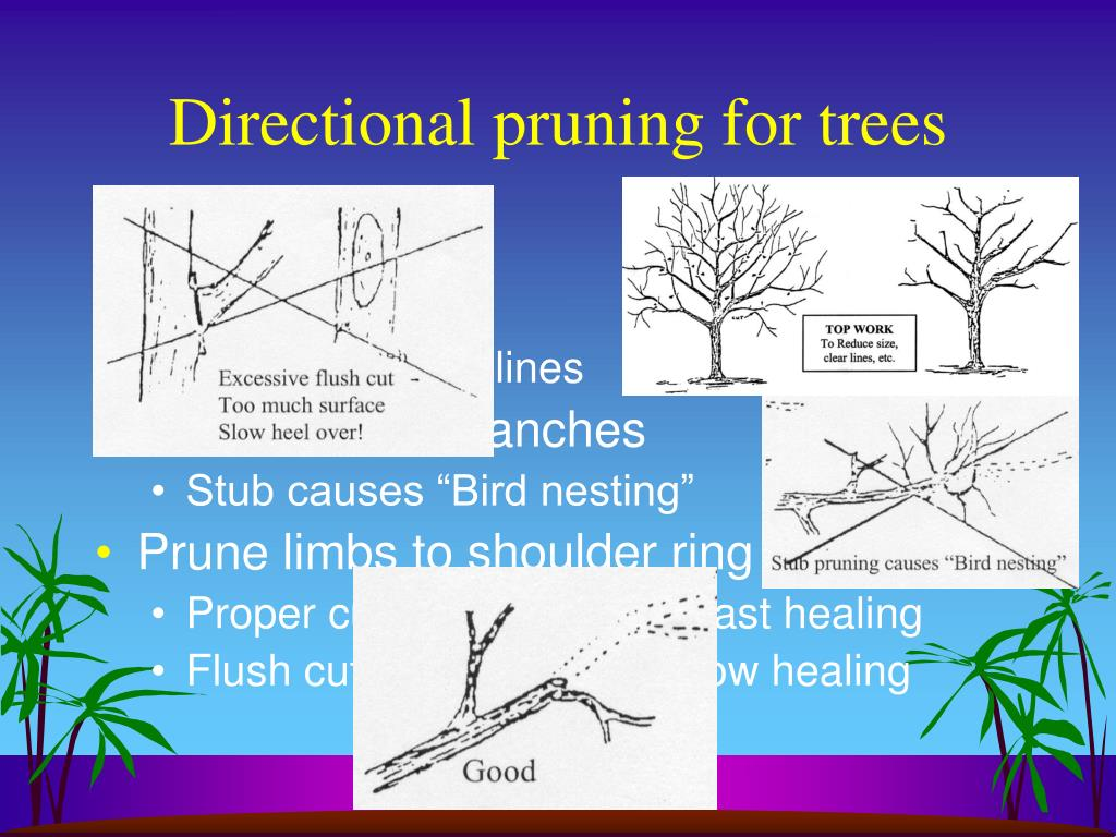 Directional pruning for trees