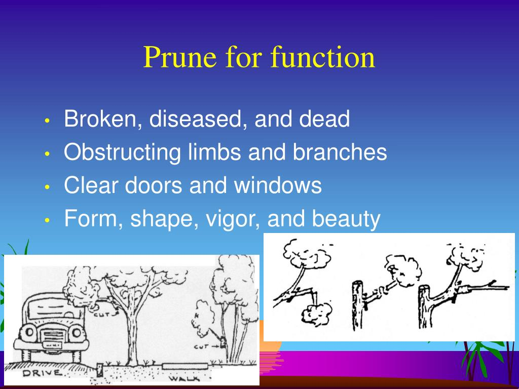 Prune for function