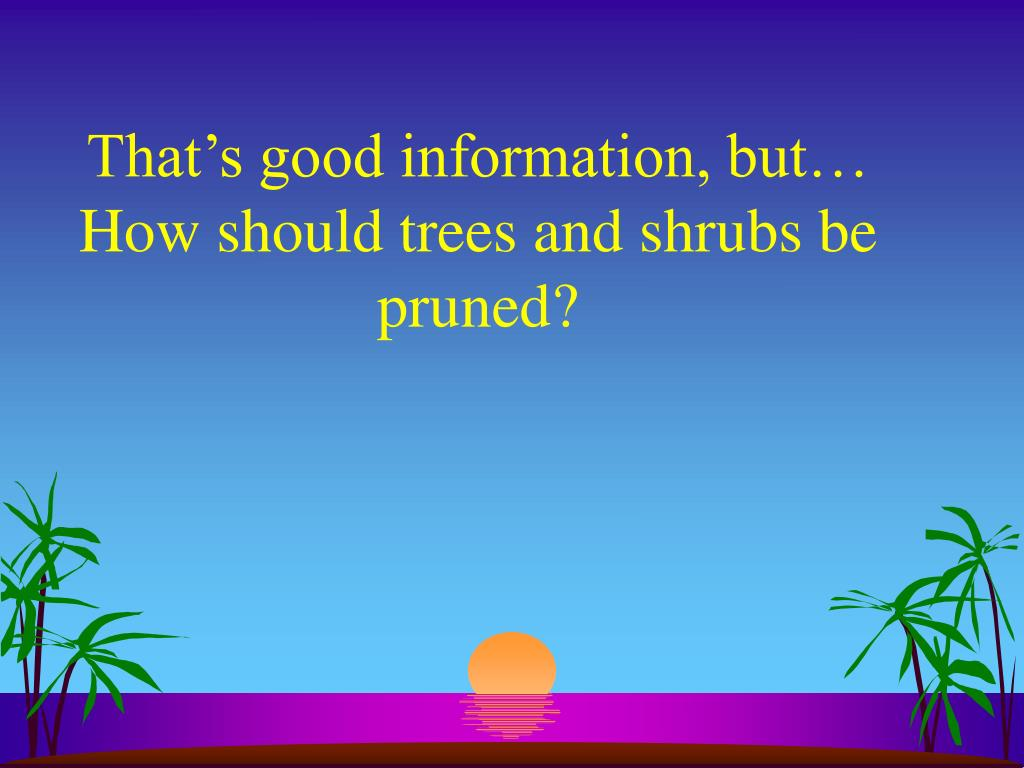 That's good information, but… How should trees and shrubs be pruned?