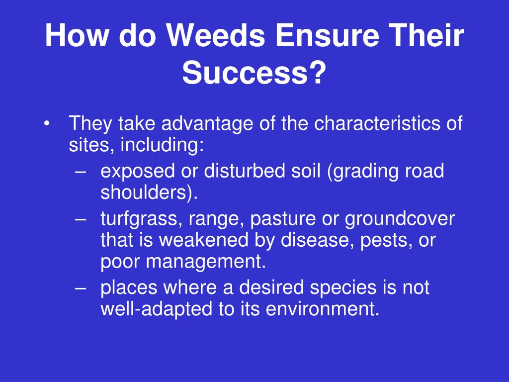 How do Weeds Ensure Their Success?
