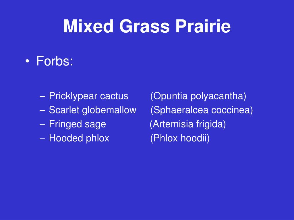 Mixed Grass Prairie