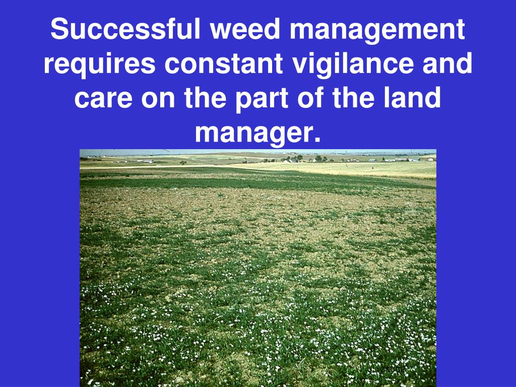 Successful weed management requires constant vigilance and care on the part of the land manager.