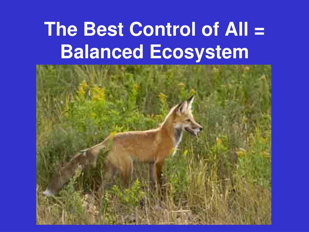 The Best Control of All = Balanced Ecosystem
