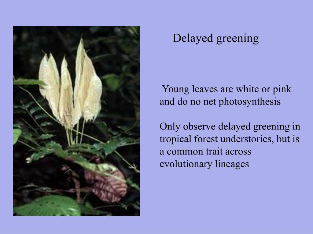Delayed greening