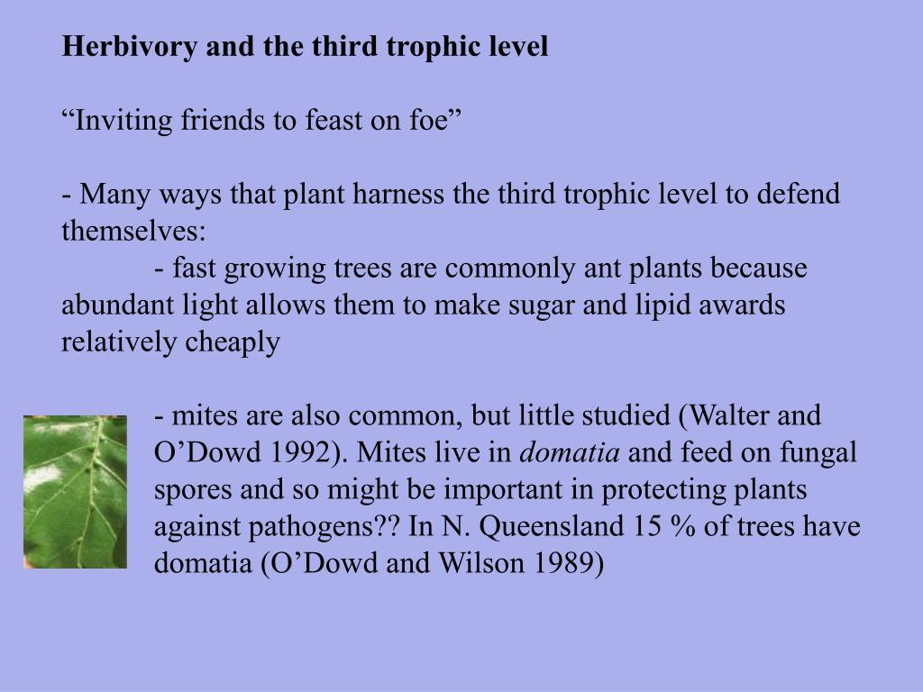 Herbivory and the third trophic level