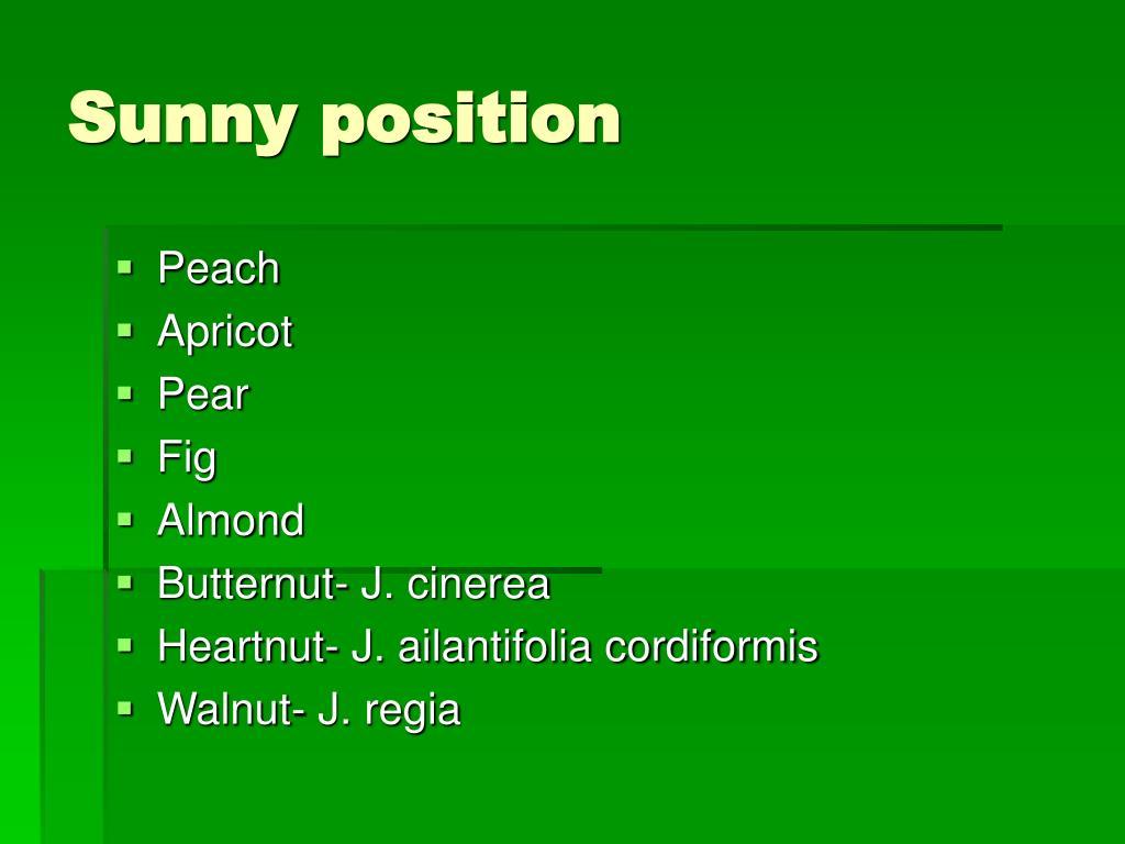 Sunny position