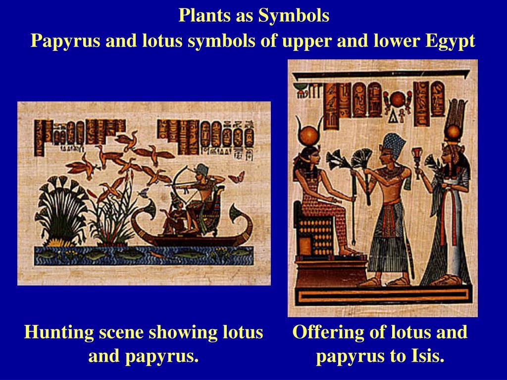 Plants as Symbols