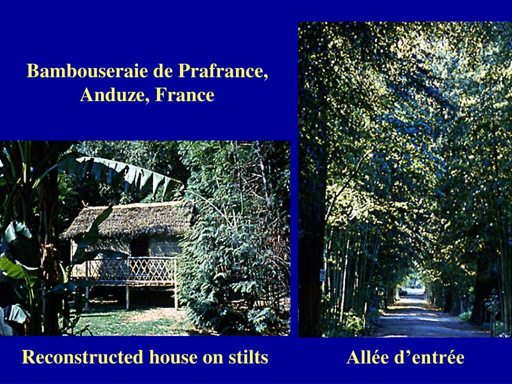 Bambouseraie de Prafrance, Anduze, France