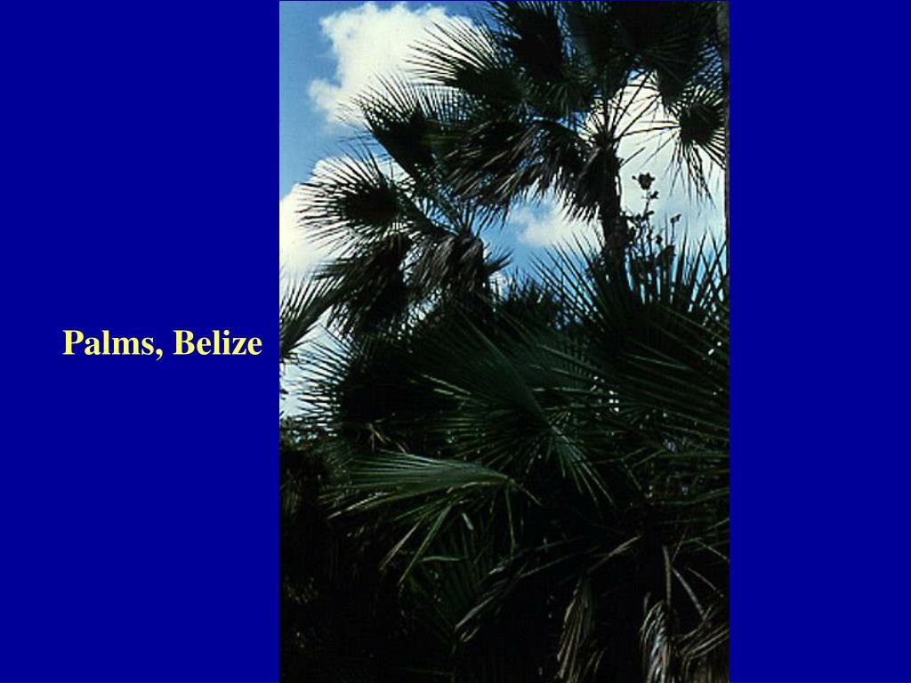 Palms, Belize