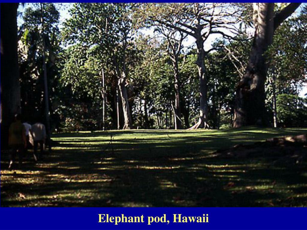 Elephant pod, Hawaii