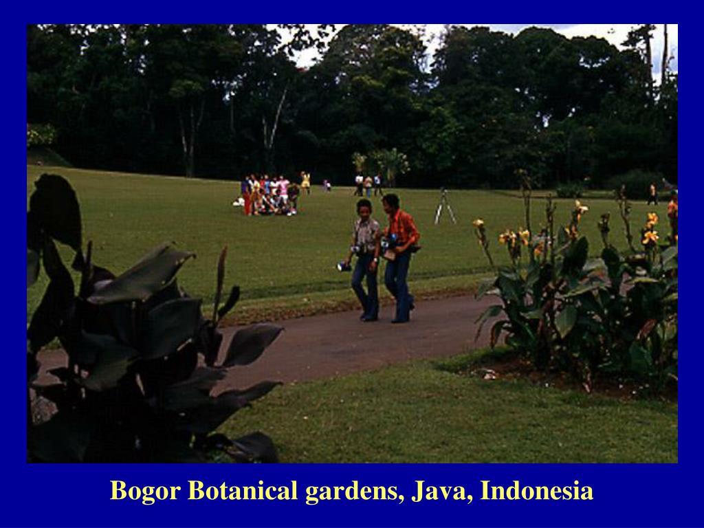 Bogor Botanical gardens, Java, Indonesia