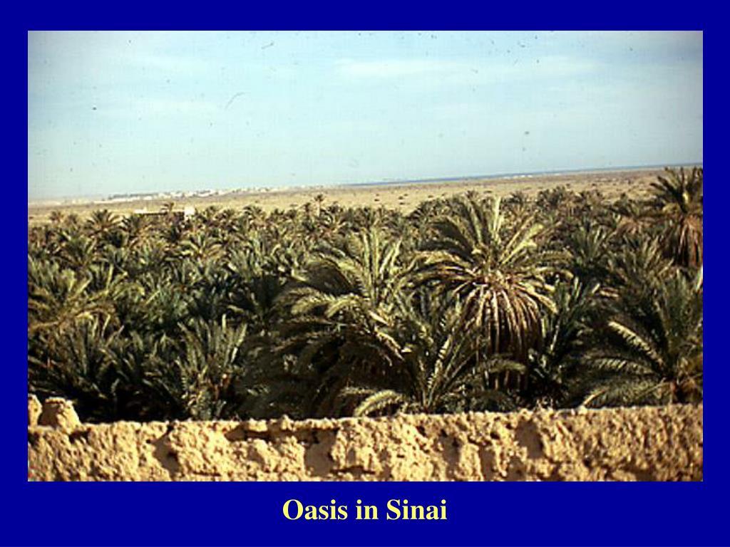 Oasis in Sinai