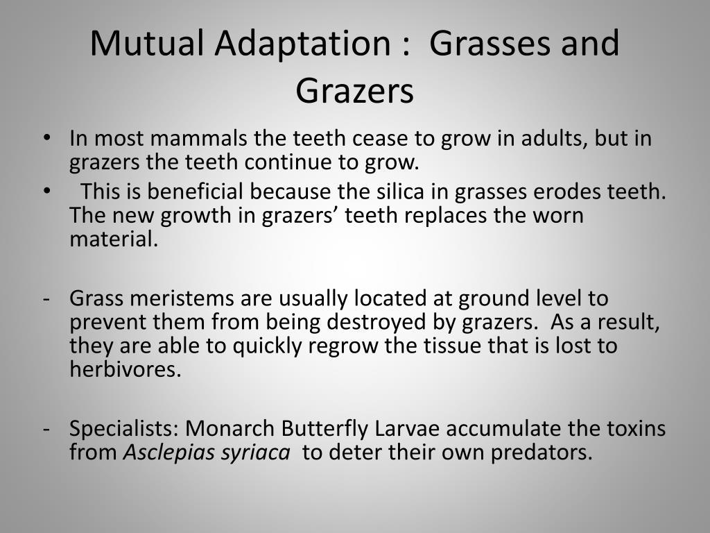Mutual Adaptation :  Grasses and Grazers