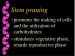 stem pruning13