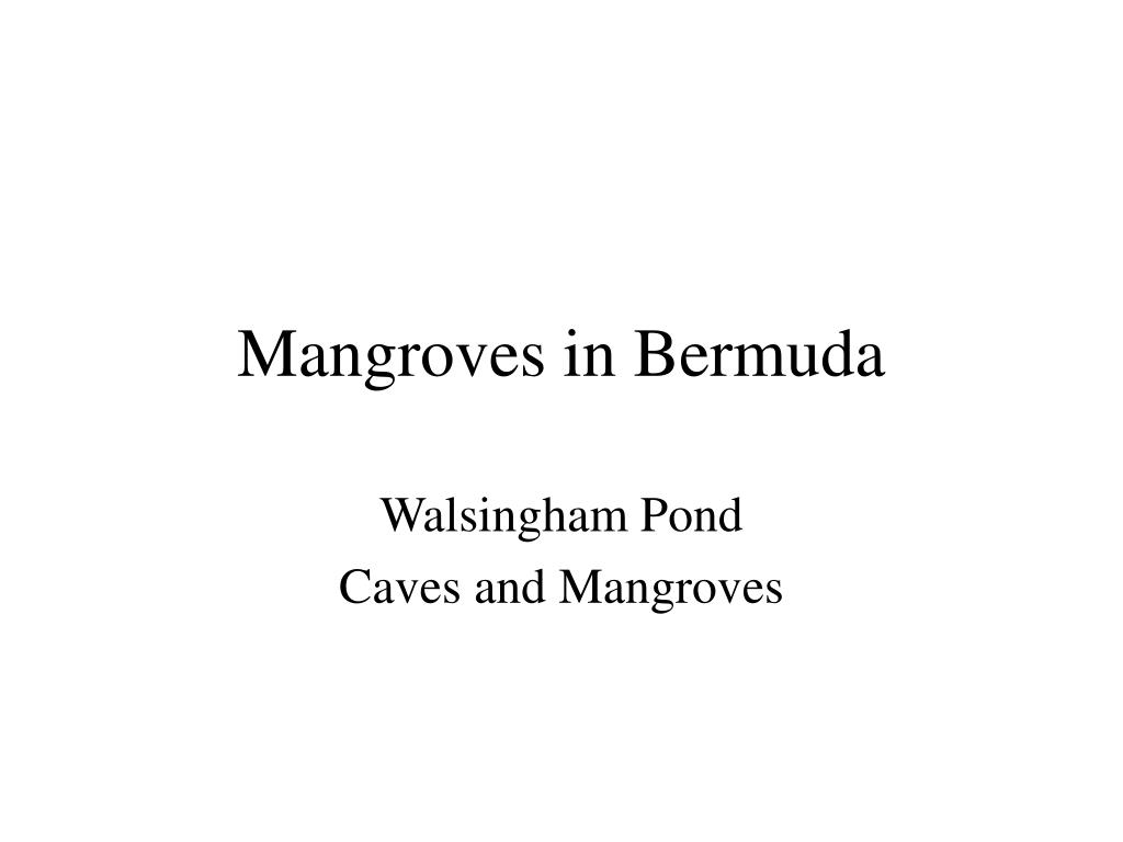 mangroves in bermuda l.