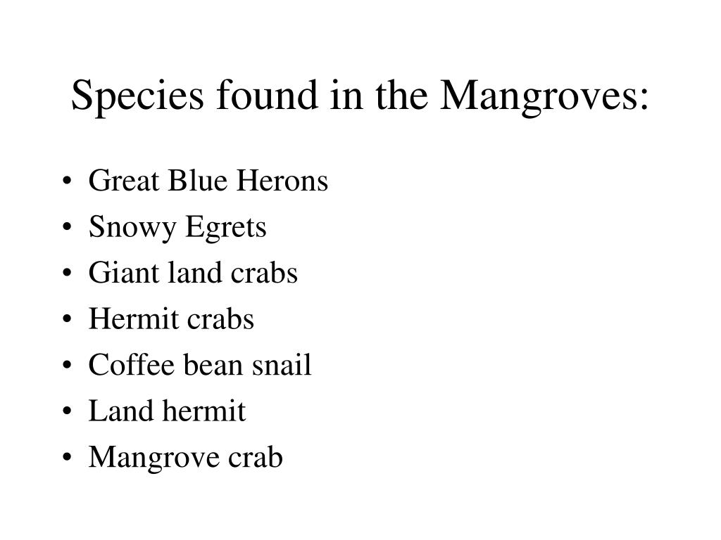 Species found in the Mangroves: