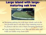 large island with large maturing oak tree