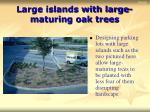 large islands with large maturing oak trees