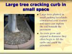 large tree cracking curb in small space