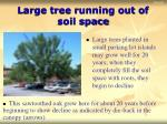 large tree running out of soil space