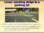 linear planting strips in a parking lot