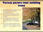 porous pavers near existing trees